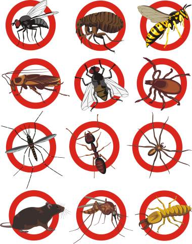 Pest control services by Bug Out Pest Solutions, LLC